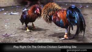 Play-Right-On-The-Online-Chicken-Gambling-Site